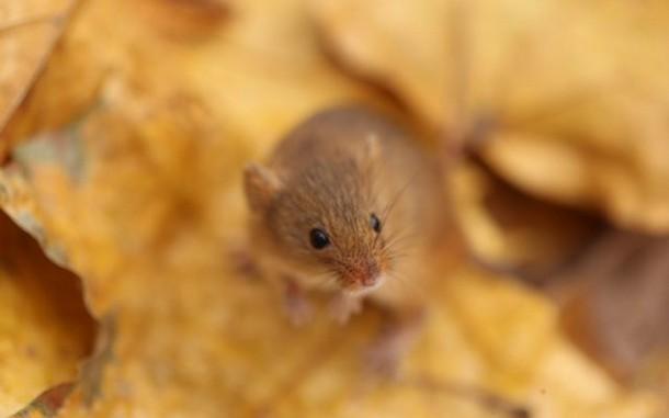 Минский зоопарк отправил в Ташкент по 40 крыс и мышей, а также других животных