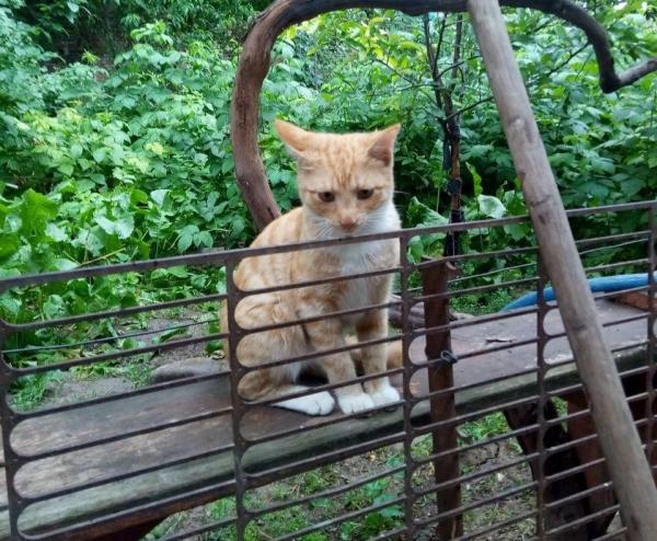 Служба отлова, участковый и председатель махалли вывезли из дома женщины ее кошек: зоозащитники обратились в Генеральную прокуратуру