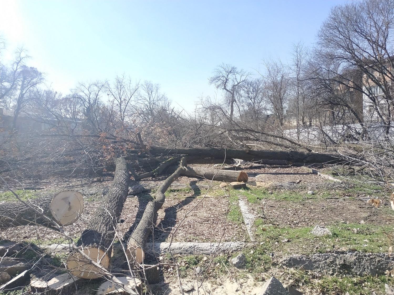 Ниязматов: несмотря на мораторий, в центре Ташкента произошла массовая вырубка деревьев (видео)