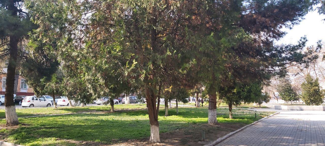 Пожалуйста, услышьте нас: охота на дворы в Ташкенте продолжается. Жители Ц-1 борются за свой парк и междомовую территорию (видео)