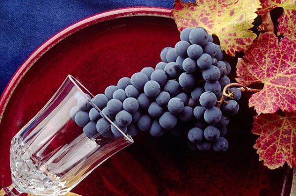 Производство вина в Узбекистане снизилось почти на 14 процентов