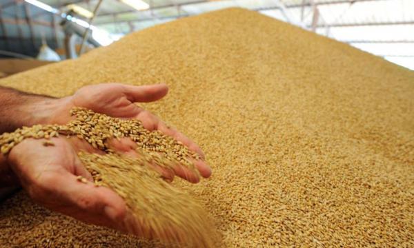 Революционный ход Узбекистана: поэтапно отменяется госзаказ на зерно