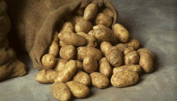 Министерство сельского хозяйства подсчитало запасы овощей на период карантина: дефицита не возникнет