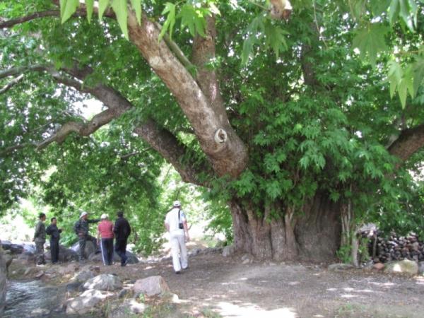 Как приумножить леса в Узбекистане?