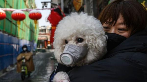 Пока G-20 виртуально общались, США вышли на первое место по числу заражений коронавирусом