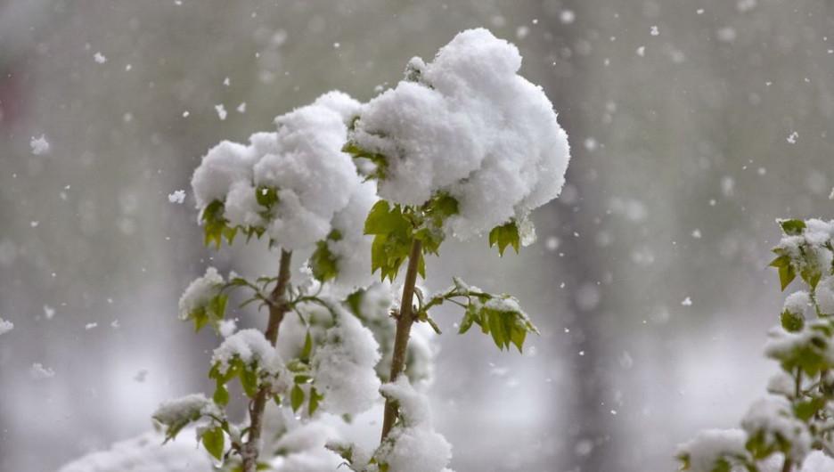 К середине этой неделе синоптики прогнозируют ухудшение погоды. Ожидается снег