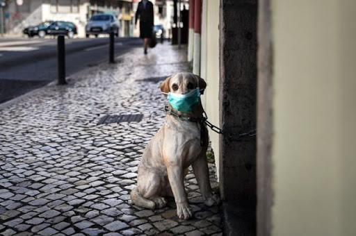 Пусть терпят: собак разрешено выгуливать 1 раз в сутки