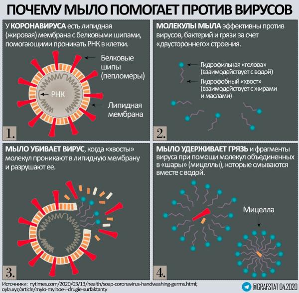 Как мыло убивает вирусы и бактерии