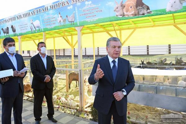 Президент дал руководителям Андижанской области указания о том, как снизить цены на мясо