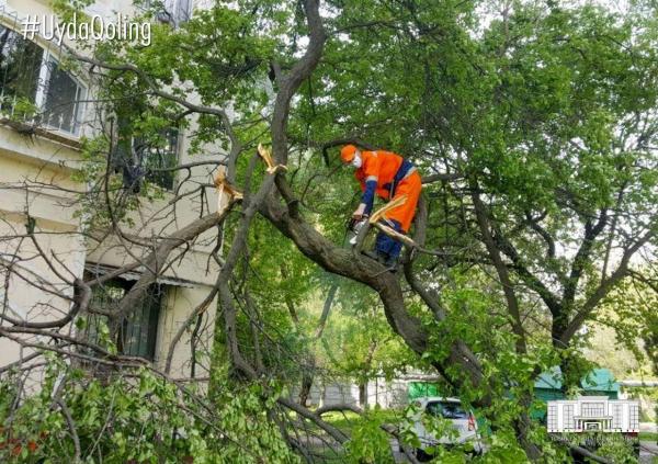 В Ташкенте продолжается ликвидация последствий снегопада: сломанные деревья вывозят свыше 300 машин (фото)
